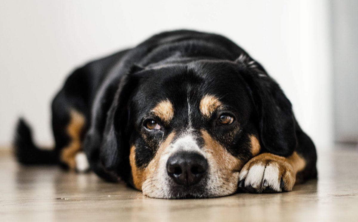 odrobaczanie-psa-1200x744.jpg
