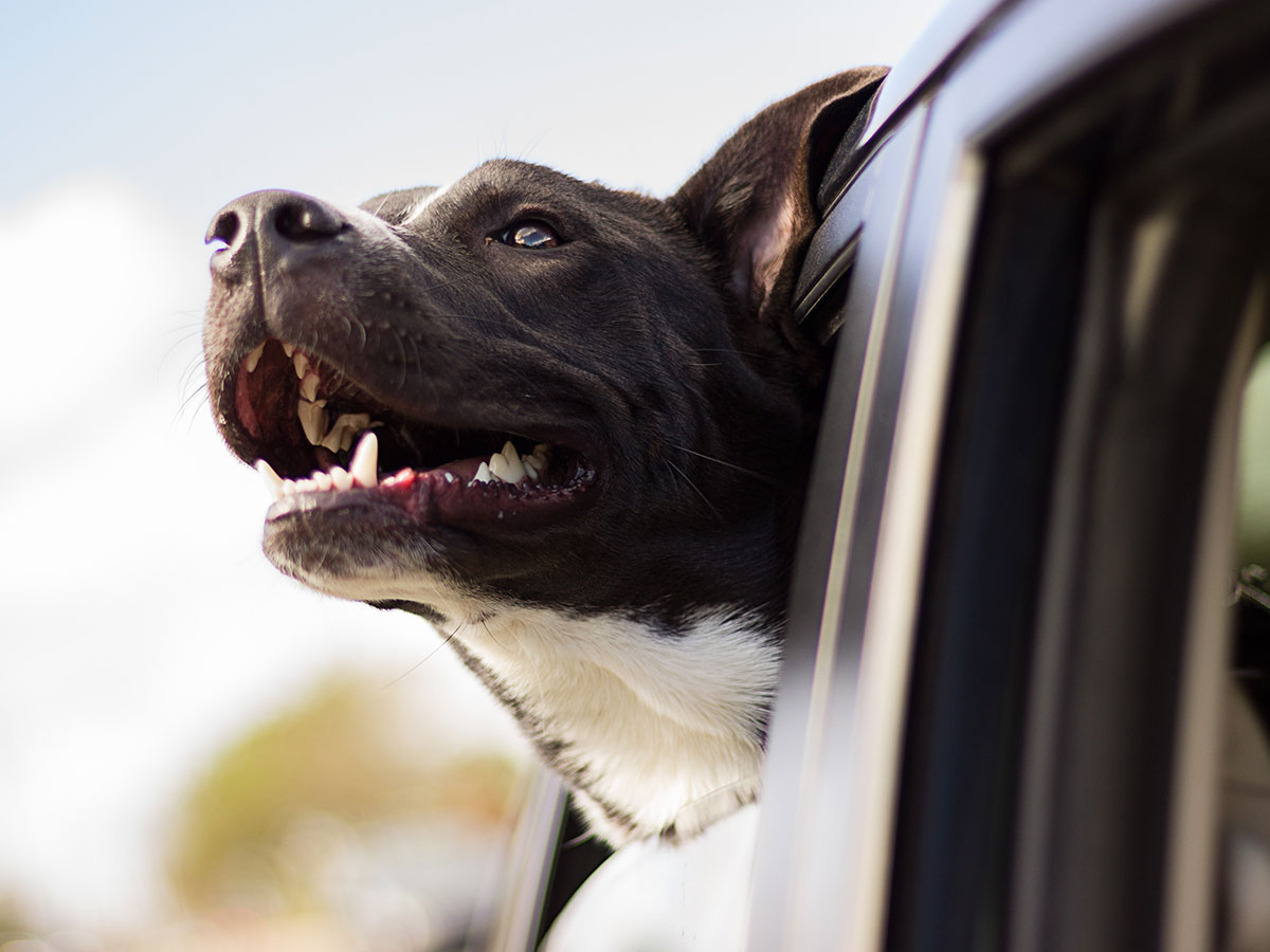 Paszporty psów i kotów