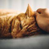 Objawy choroby u kota - jak poznać czy kot jest chory