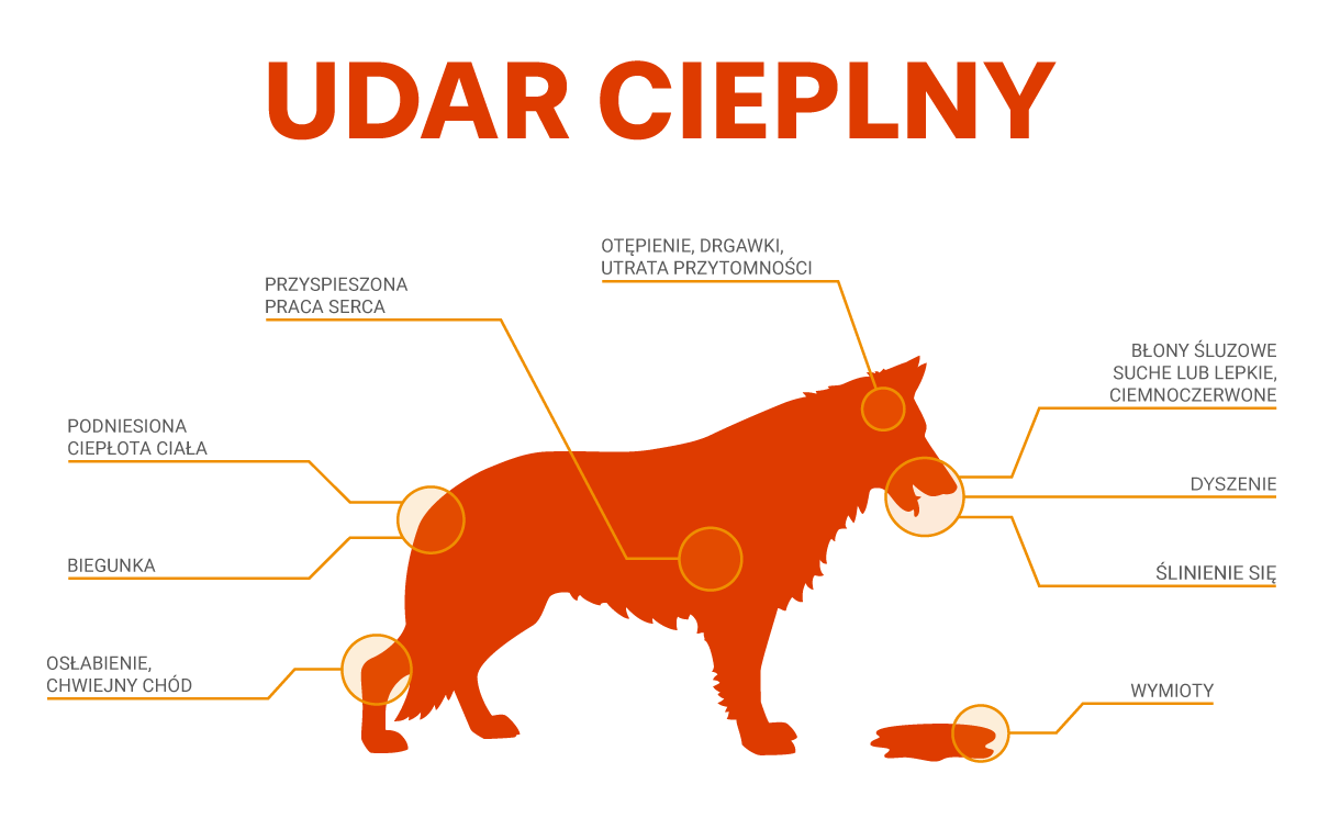 udar-cieplny-cover.png